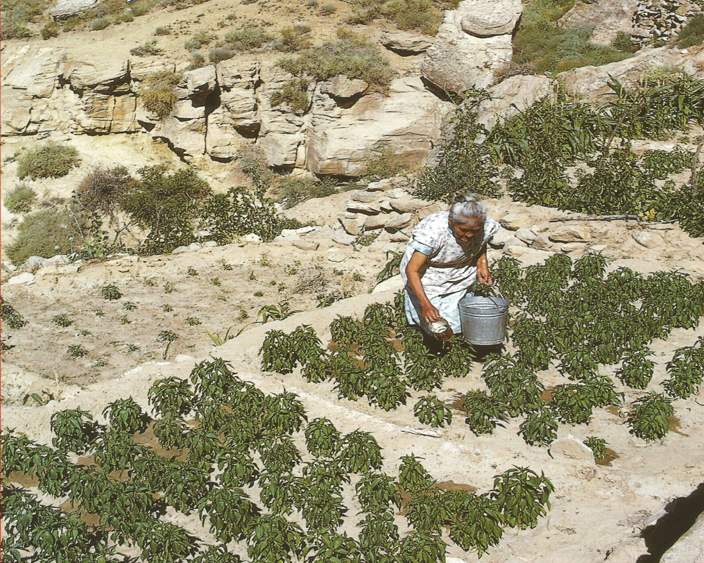 hopi indians The hopi indians were farmers, subsisting off of corn, beans and squash while raising turkeys as livestock antelope, deer and small game supplemented this basic diet, as did nuts, fruits.