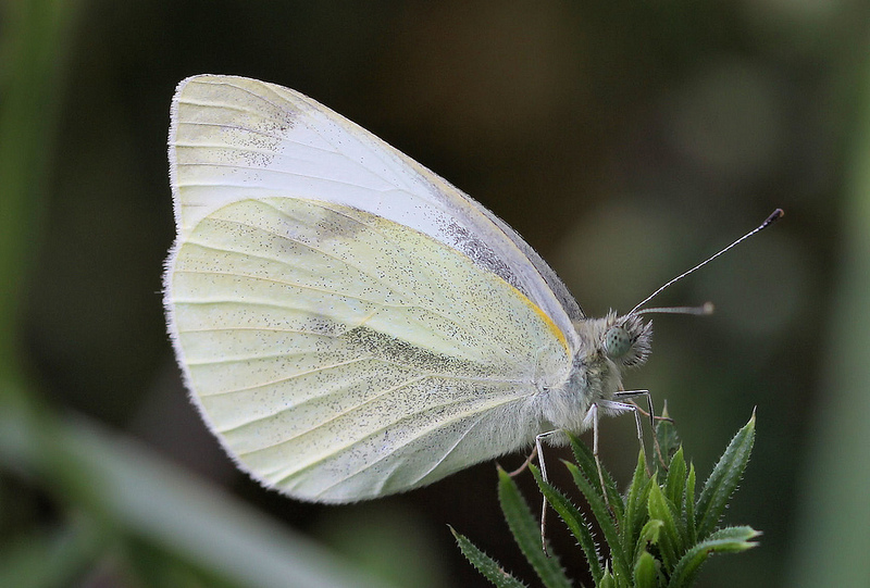 Dragonflies, Butterflies & Mythology