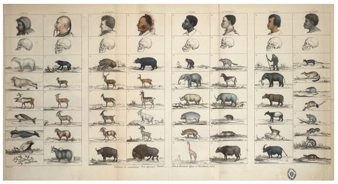 discoveries through animals and types of