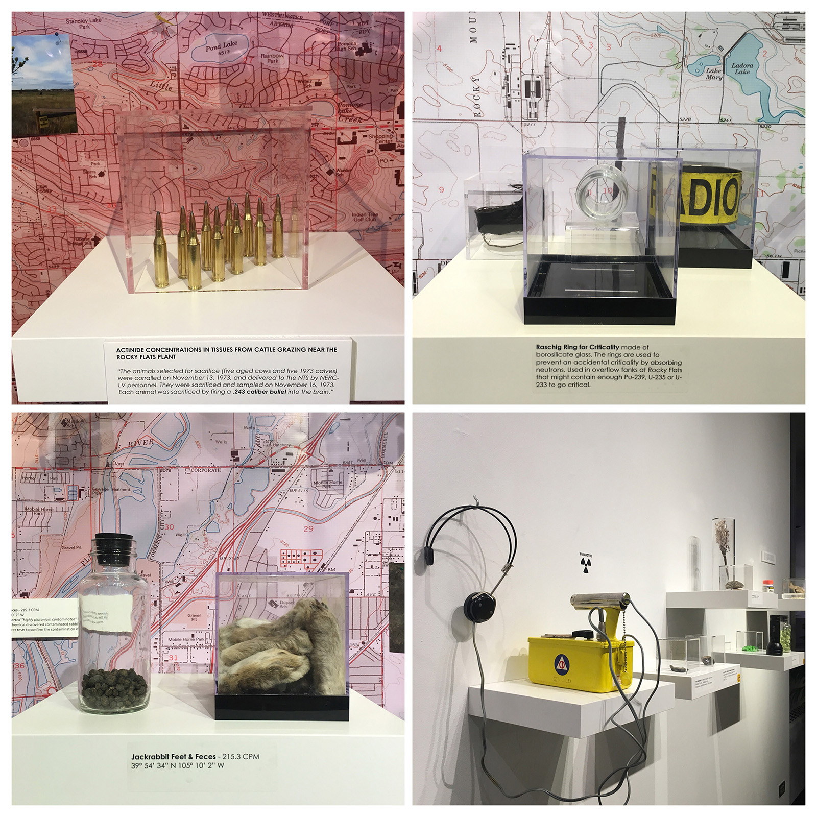 Grid of four images showing different individual artifacts in vitrines from Gregg Schlanger's art installation.